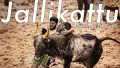 Jallikattu Song Lyrics