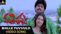 Malle Puvvulo Song Lyrics